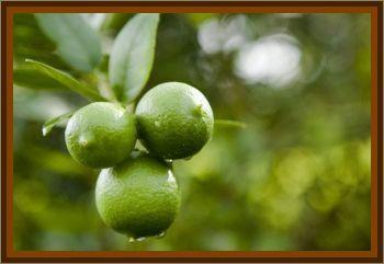 Strange Lime Grove Encounter
